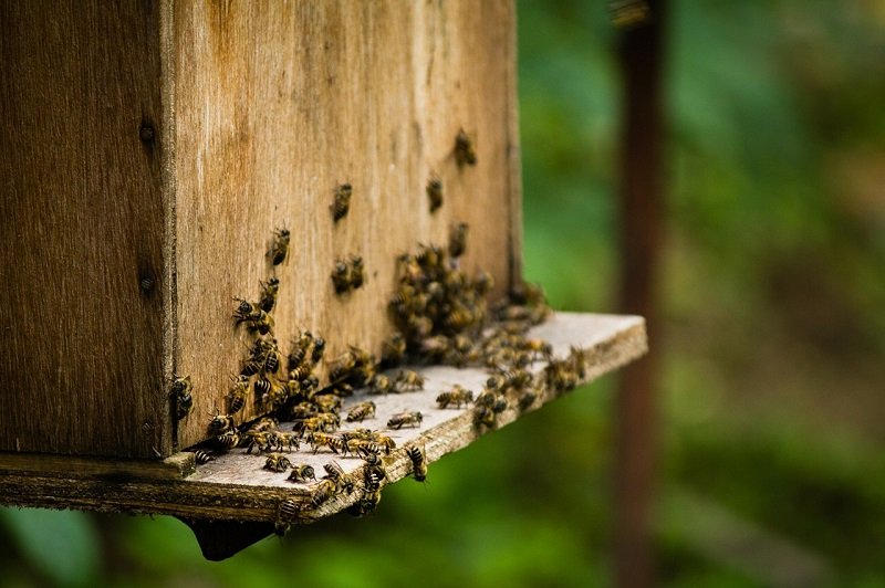 Apiaries also have other objectives or roles such as honey production