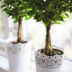 Use these easy tips to keep your houseplants healthy and green
